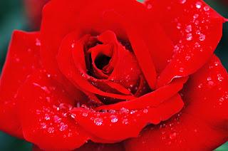 amore, monachesimo, contemplazione, esperienza di Dio