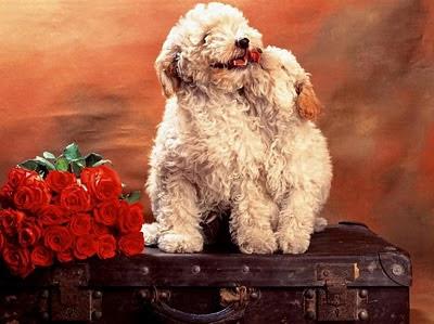 Pseća ljubav - besplatna e-card čestitka za Valentinovo