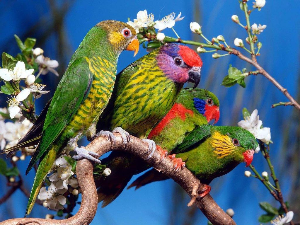 Download besplatne slike i pozadine za desktop: Papige na grani