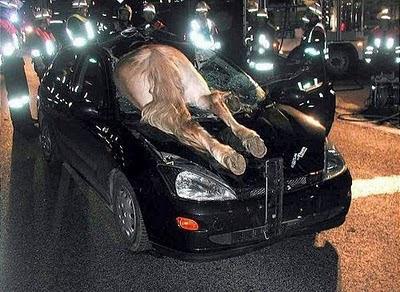 smiješne slike konj auto