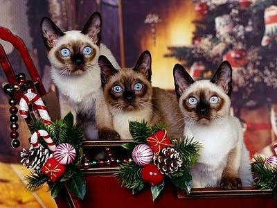 Božićne slike Novogodišnje čestitke besplatne pozadine za desktop mačke download free e-cards wallpapers Christmas cats