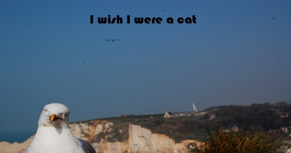 I wish I were a cat