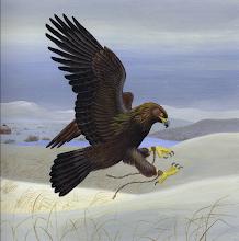 Chasse à l'aigle