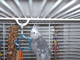 MY CAGE IS FUN I HAVE MANY TOYS