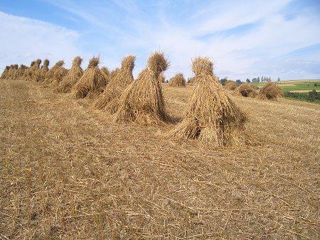 Łąka w Przyszowej