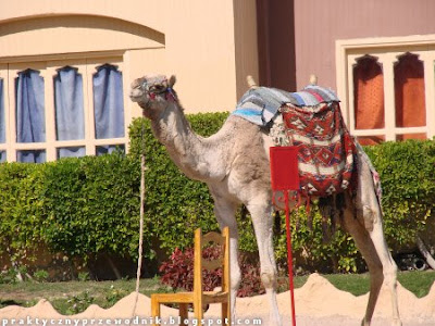 Wakacje w Hurghadzie