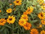 My Flowers In the Garden