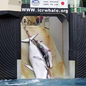 [20080416_whaling.jpg]