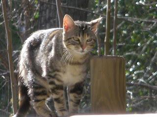 gato fiera parque grande Zaragoza