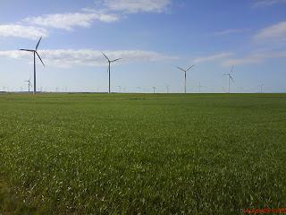 Campos de verde trigo en la Plan de Cadrete Zaragoza