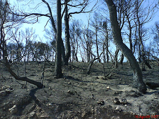 monte quemado incendio Valmadrid La Plana