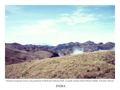 The grasslands of Mukurthi National Park (Tamil Nadu) near Silent Valley national park