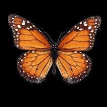 ...chwile są ulotne jak motyle, dlatego warto fotografować...