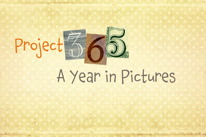 Project 365 - A Year in Pictures