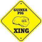 Pigs Xing