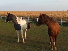 Callie&#39;s Horses