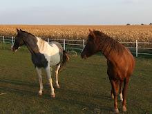 Callie's Horses