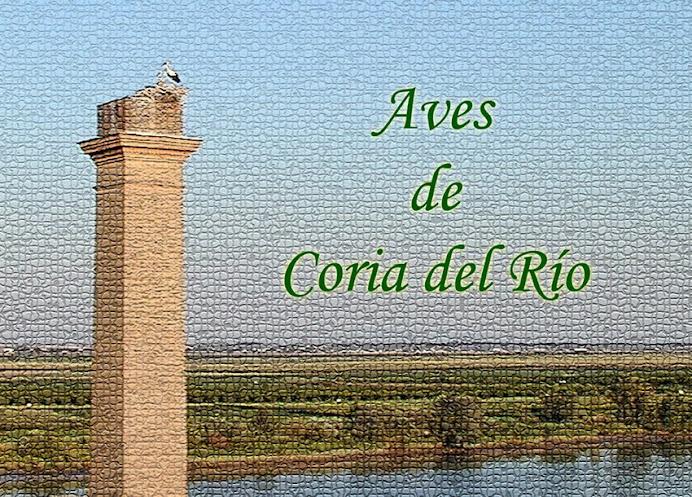 Aves de Coria del Río y su entorno