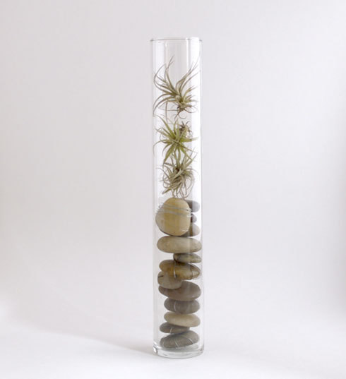 Easily inspired diy vase and air plants for Air vase