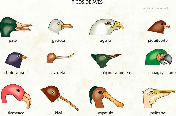 Aves no aptas para consumo humano según la ley Mosaica