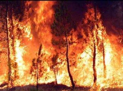 Batalla de imagenes¿?? Incendio11
