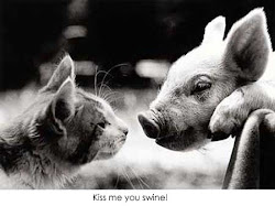 Mr Pig and Mrs Cat