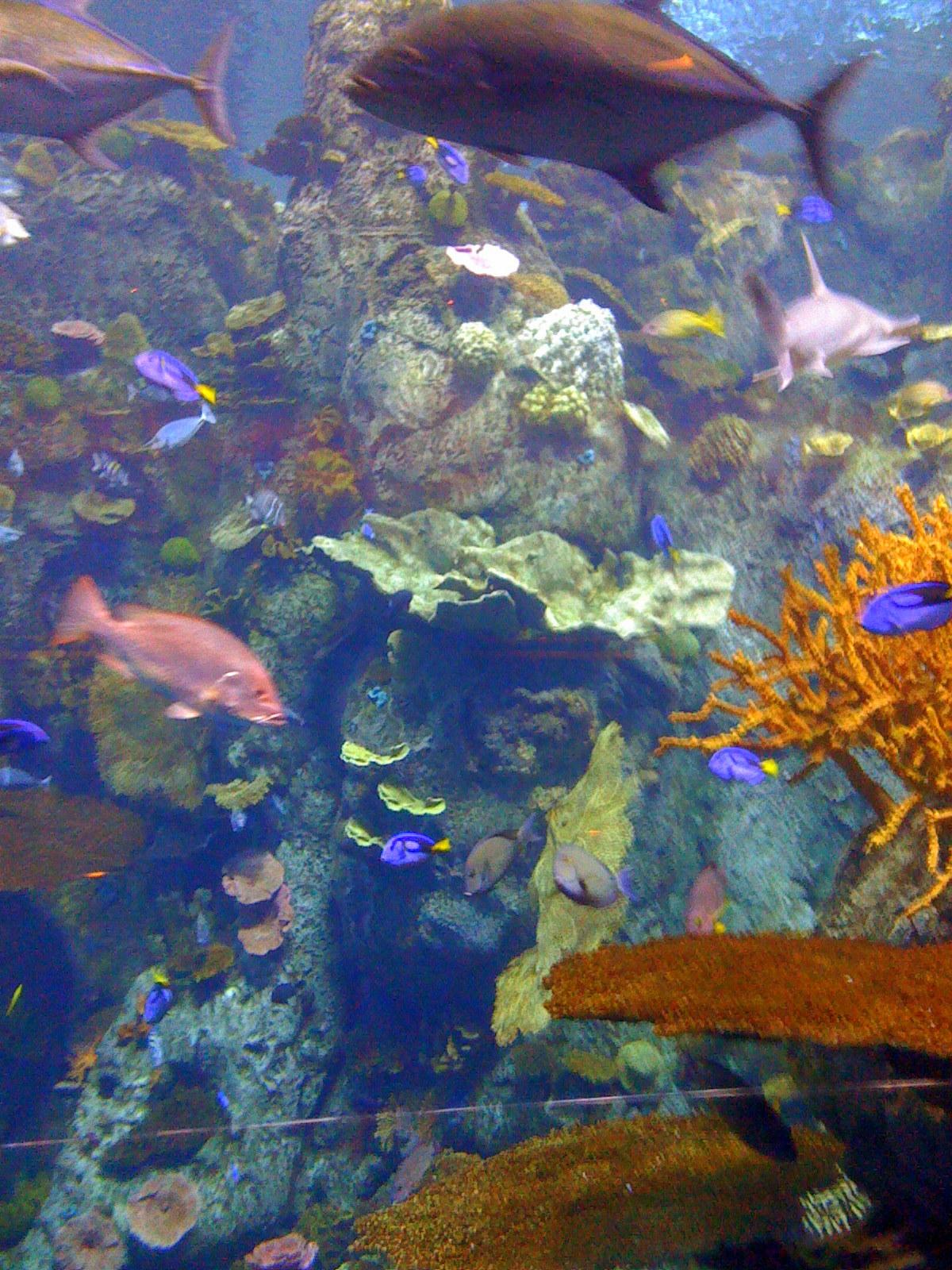 [aquarium.jpg]