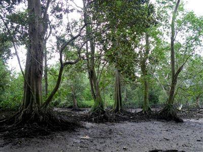 Mandai Mangrove