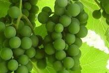 In Vinis Veritates:                             Weinblog meines Vertrauens