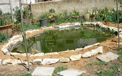 Il giardino di anna 03 15 09 for Laghetto giardino zanzare