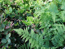 invasive:  brackenfern with some salal in the background