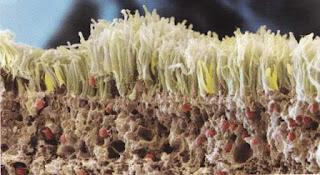 fotografia della retina- coni e bastoncelli