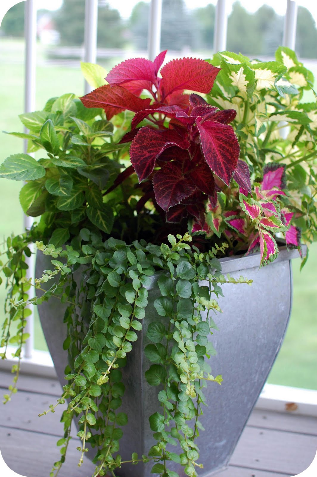 33 shades of green container gardening for Container gardening