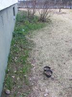 sipulikukkia eteläseinustalla