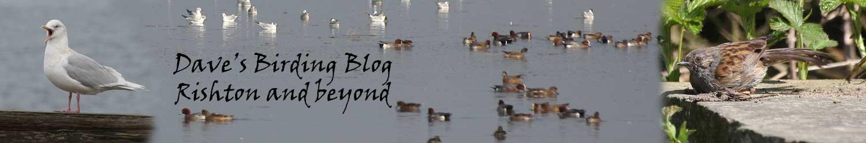 Dave's Birding Blog