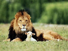 Lejon och lamm
