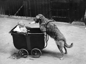 [dog+with+stroller]