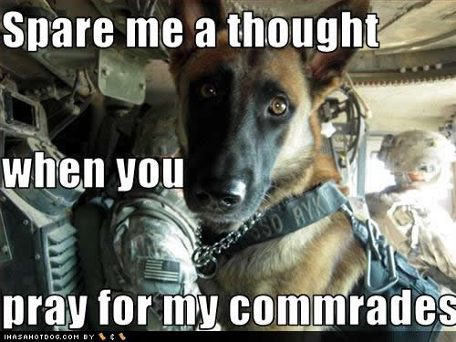 [veterans+day]