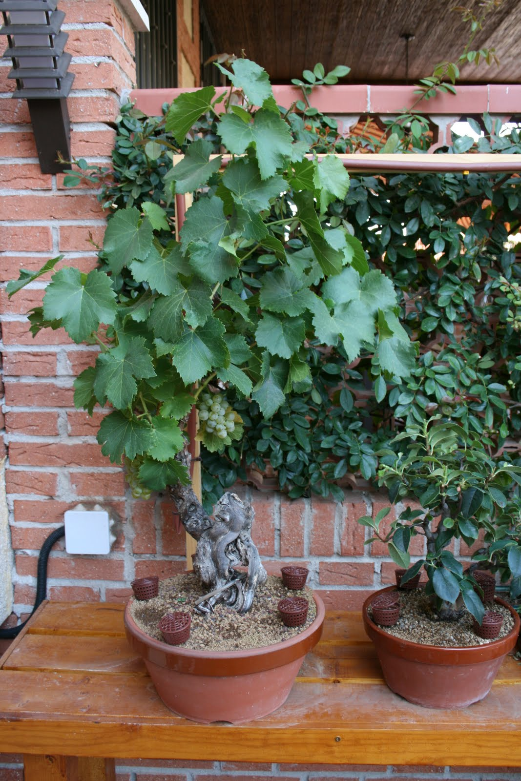 Plantas en maceta una vista a mi jard n vid - La casa de la maceta ...