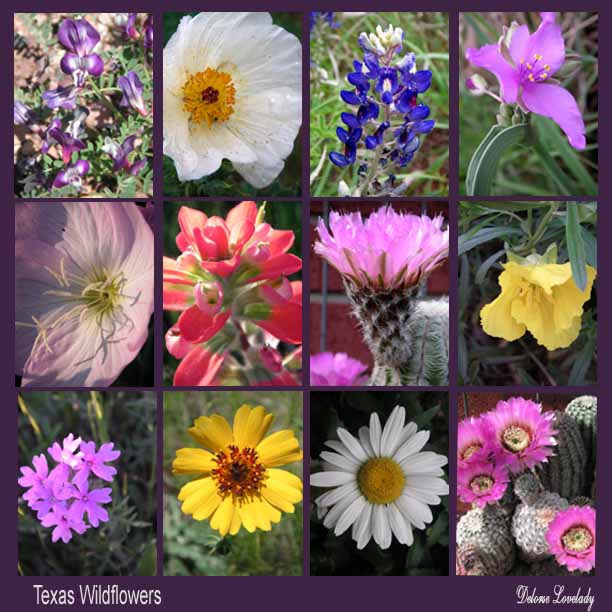 Heartfire art spring flowers and more flowers savoring the texas spring beauty overflowing with color mightylinksfo