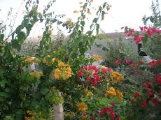 le  joli jardin!