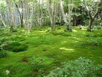 苔庭の緑が心を癒してくれる