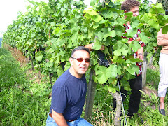Baden Baden, Germany - Riesling Vineyard