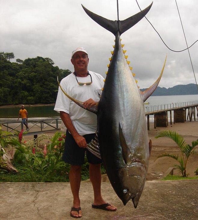 Panama Giant