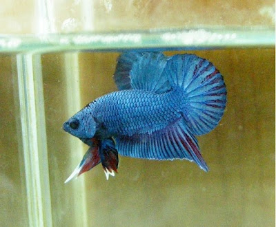 Sherisse\'s blog: Although fish aren 39t exactly considered ...