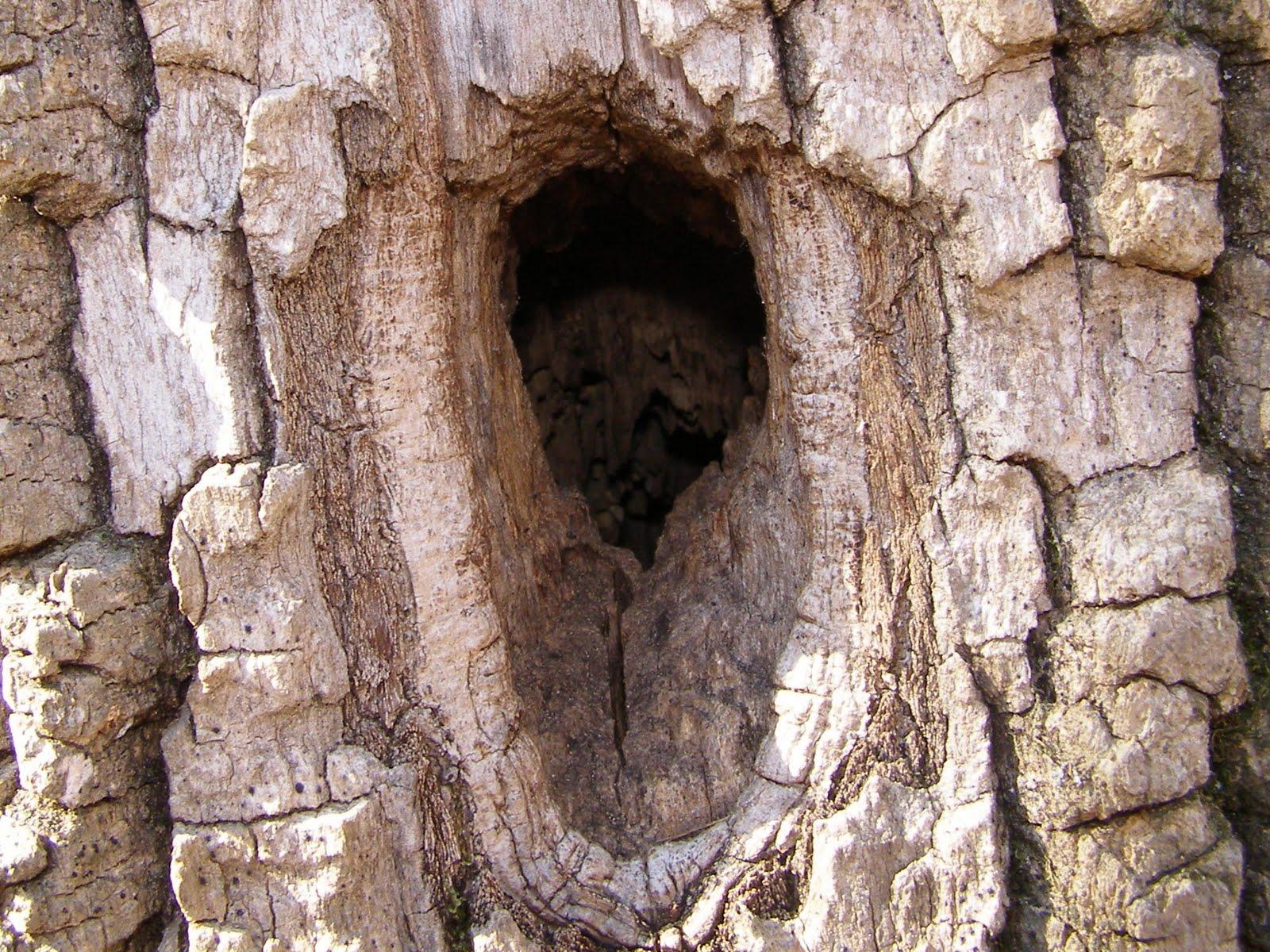 Blue Jay Barrens: Woodpecker Holes