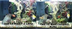 T2  aquarium light comparison with Compact Fluorescent lights