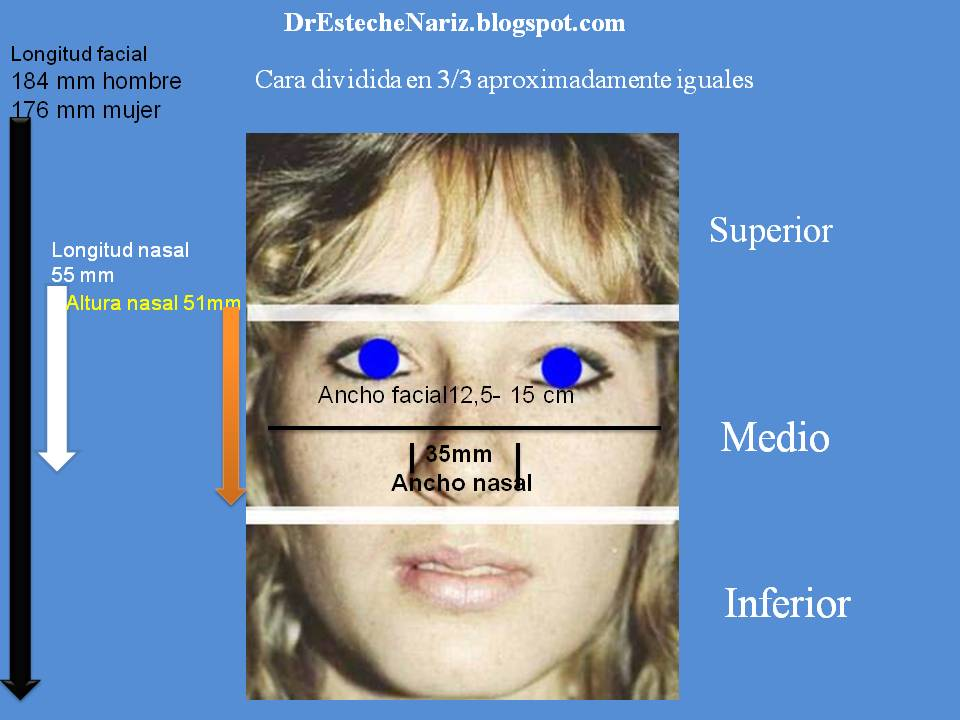 Dr Esteche | Rinoplastia | Cirugía Plástica de Nariz: EXAMEN GENERAL ...