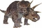Triceratops!!!