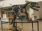 Allosaurus!!!